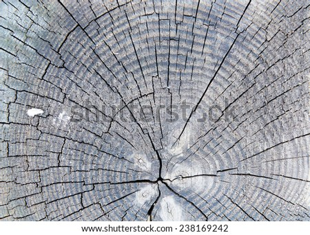 section on spruce beam, close up of the rings  - stock photo