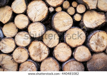 Section plane of natural wood log background. The saw cuts logs.   - stock photo