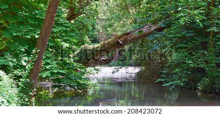 Secular tree fell over the the river. Clear waters and exotic plants. - stock photo