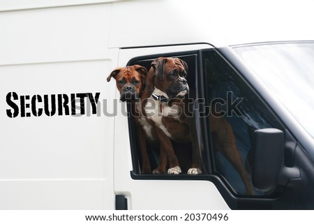 Security Van with two boxer Dogs - stock photo