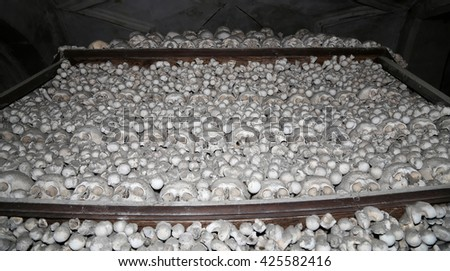 Sedlec Ossuary is a small Roman Catholic chapel, located beneath the Cemetery Church of All Saints in Sedlec, a suburb of Kutna Hora in the Czech Republic - stock photo