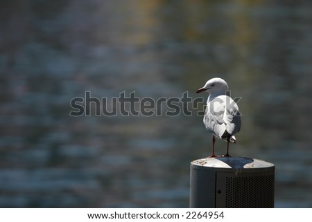 See gull resting in a harbour - stock photo
