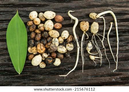 seed germination - stock photo