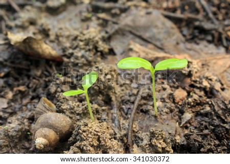seed germination growth into forest