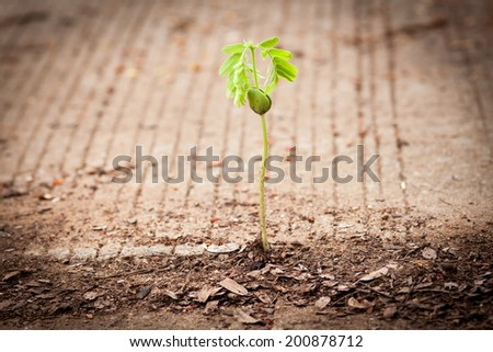 seed growing through crack in pavement - stock photo