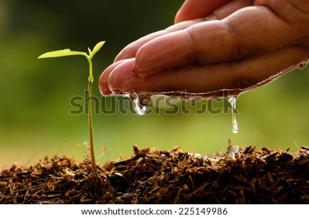 Seeding,Seedling,Male hand watering young tree over green background,seed planting - stock photo