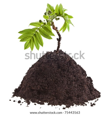 Seedling green plant in pile soil isolated on white background - stock photo