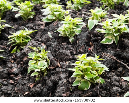 Seedling green plant surface - stock photo