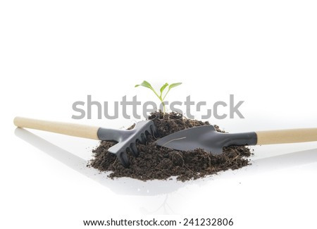 seedling growing and Shovel And Rake on white - stock photo