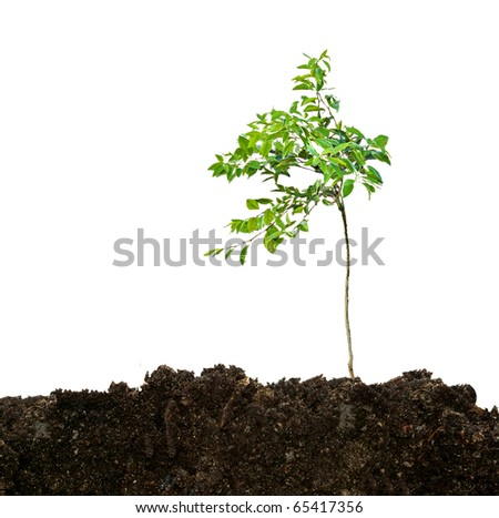 seedling growing from soil - stock photo