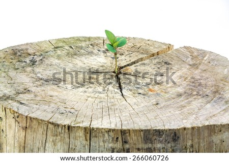 Seedling growing in a timber isolated on white background,Focus on seeding