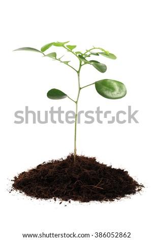 Seedling isolated over white background. - stock photo