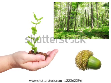 Seedling of oak in human hand, acorn and green forest landscape background - forest recreation and environment protection concept - stock photo