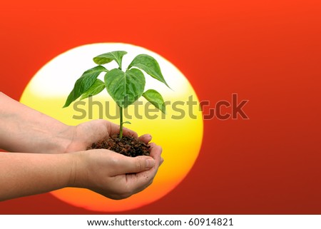 Seedling of young plant and human hands on orange sunset background - stock photo