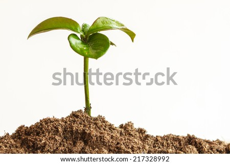 Seedling plant with black earth on white background - stock photo