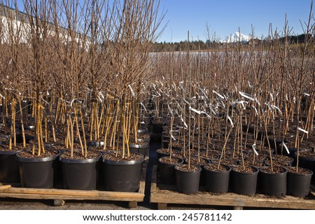Seedling plants ready in pots at a plant nursery Oregon. - stock photo