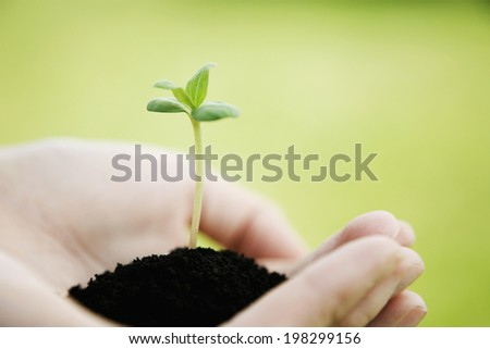 Seedlings And A Hand