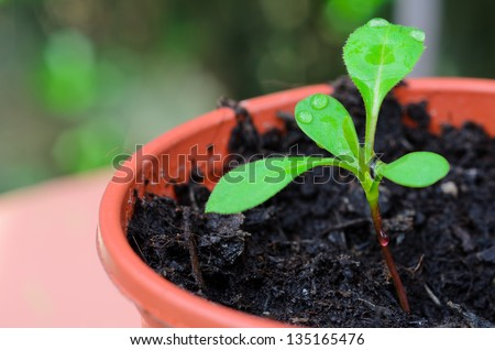 Seedlings growing in the greenhouse - stock photo