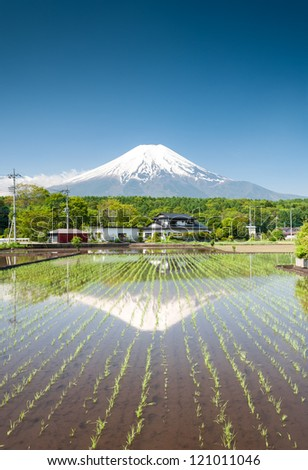 Seedlings growing on a rice field close to Mt Fuji/Japan. - stock photo