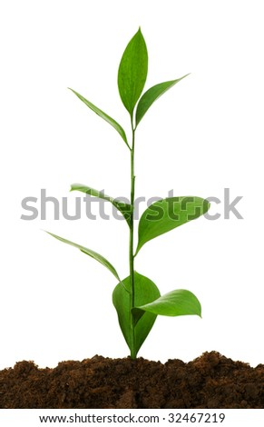 Seedlings illustrating the concept of new life - stock photo