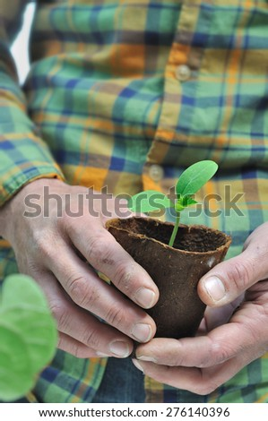 seedlings in biodegradable pot in the hand of a gardener - stock photo