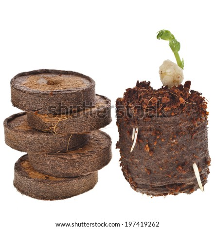 Seedlings in peat compressed tablet isolated on white background - stock photo