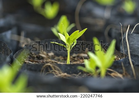 Seedlings in plastic bags  - stock photo