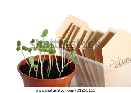 Seedlings in pot and seed packets, close up, isolated on white background