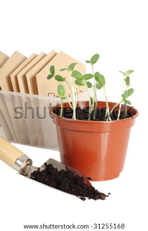 Seedlings in pot, garden scoop and seed packets, isolated on white background - stock photo