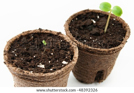 seedlings in pots on a white background - stock photo