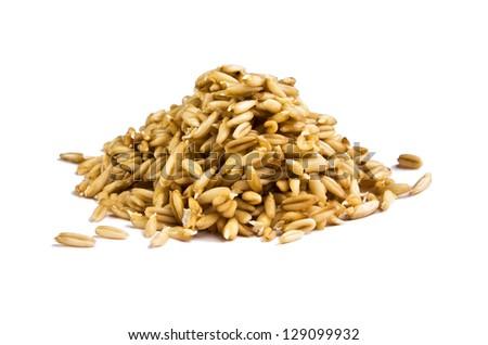 Seedlings of oat - stock photo
