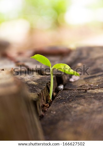 Seedlings on a tree stump - stock photo