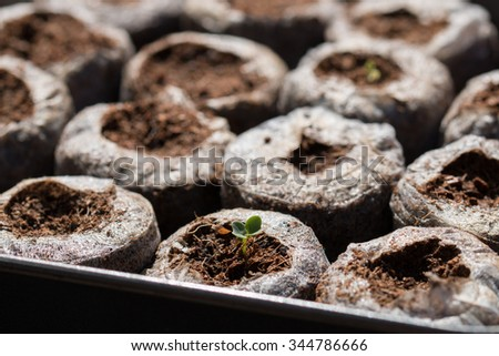 Seedlings planted in easy grow pallets - stock photo