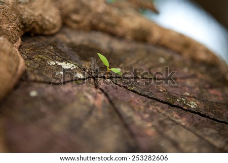 Seedlings sprout from stumps. - stock photo