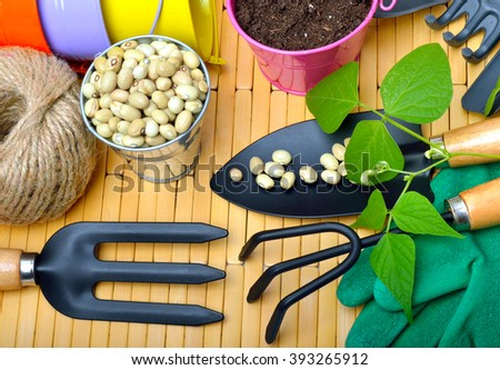 Seeds and bean sprouts  with gardening tools on wooden table. - stock photo