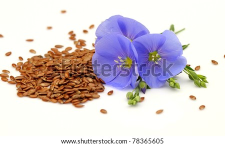 Seeds and flowers of flax - stock photo