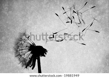 Seeds fly off of a dandelion - stock photo
