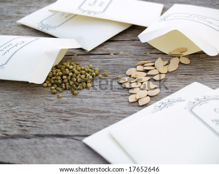 Seeds for planting 2009 season, collected from the 2008 crop. Shallow DOF, cilantro and acorn squash seeds in focus. - stock photo