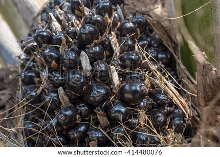 Select focus palm oil - stock photo
