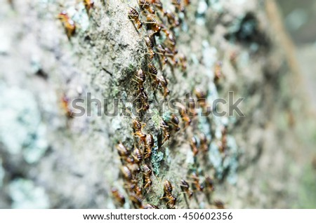 Selected focus of a group of termite migrating to the new place