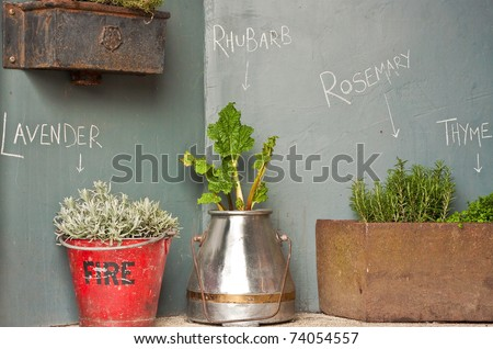 Selection of herbs and rhubarb plants in interesting containers - stock photo