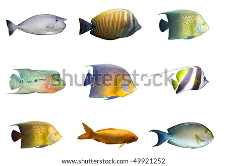 Selection of multicolored tropical fished isolated on white - stock photo