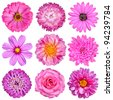 Selection of Pink White Flowers Isolated on White. Nine Flowers - Daisy, Strawflower, Zinnia, Cosmea, Chrysanthemum, Iberis, Rose, Dahlia - stock photo