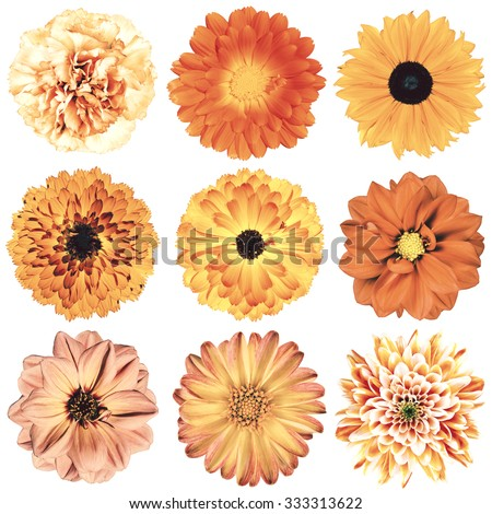 Selection of Various Flowers in Orange Vintage Retro Style Isolated on White Background. Daisy, Chrystanthemum, Cornflower, Dahlia, Iberis, Primrose, Gerbera, Rose. - stock photo