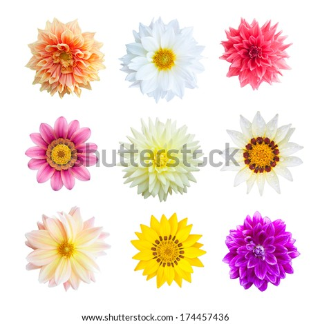 Selection of Various Flowers Isolated on White Background. Colorful of flowers - stock photo