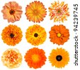 Selection of Various Orange Flowers Isolated on White Background. Dahlia, Daisy, Chrysanthemum, Pot Marigold, Carnation - stock photo