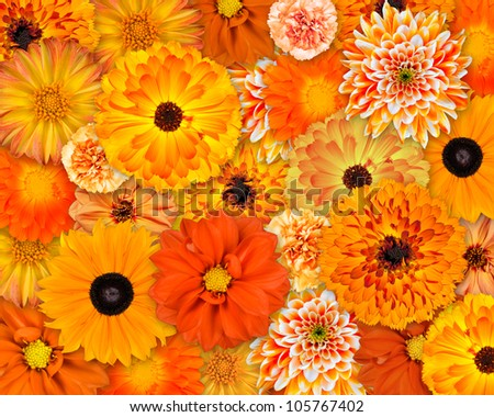 Selection of Various Orange Flowers on top of each other. Background of Dahlia, Daisy, Chrysanthemum, Pot Marigold, Carnation Flowers - stock photo