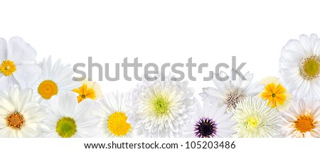 Selection of White Flowers at Bottom Row Isolated on White Background. Set of Daisy, Gerber, Marigold, Osteospermum, Chrysanthemum, Strawflower, Cornflower, Dahlia Flowers