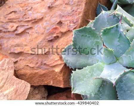 selective focus a part of  A succulent cactus plant in garden with stone which can be used as background - stock photo