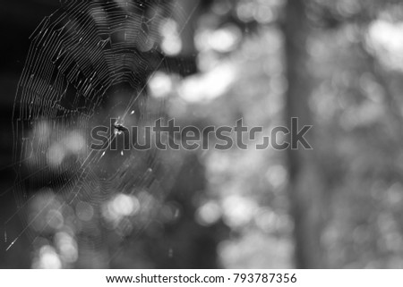 Selective focus black and white image of cobweb on blurred nature background